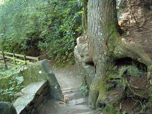 Trail to Upper Falls