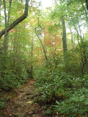 Woods on Little Lost Cove Cliffs Trail