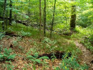Grassy, Open Woods