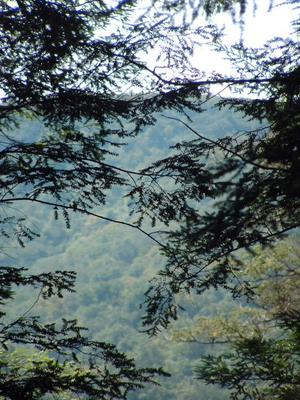 View Thru the Hemlocks