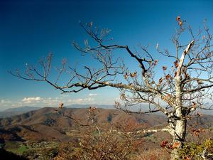 Stunted Oak on the Summit