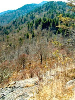 View along Fork Ridge