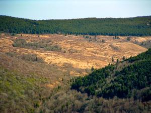 Closeup of Flat Laurel Creek Valley