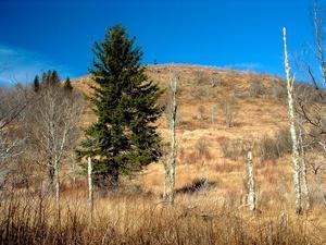 Looking toward Graveyard Ridge