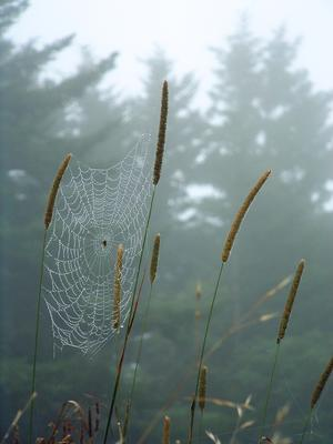 Spider Web in Fog