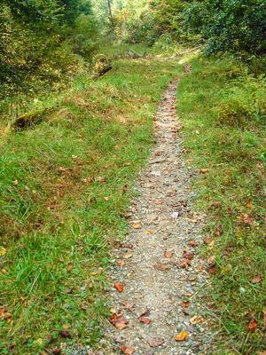 The Davidson River Trail