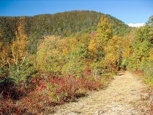 Small Clearing and Main Ridge