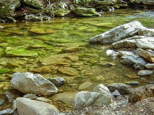 The Crystal-Clear Waters of the Jacob Fork River