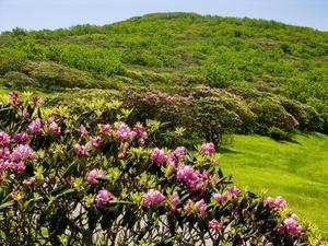 Craggy Pinnacle In Bloom