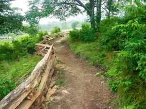 The New Trail