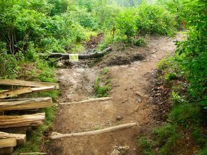 Where the New Trail Splits