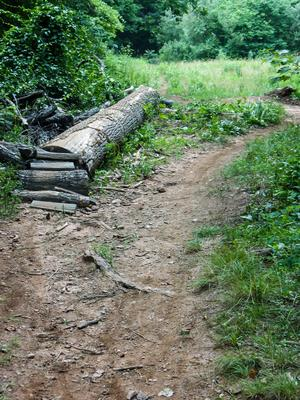 Technical Trail Feature on the Lower Sidehill Trail