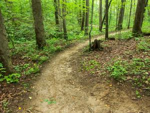 Wolf Branch Trail Curve