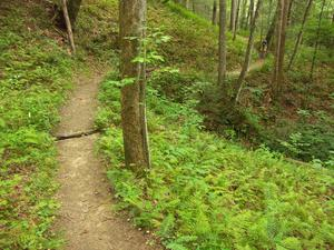 Section of trail through the open woods