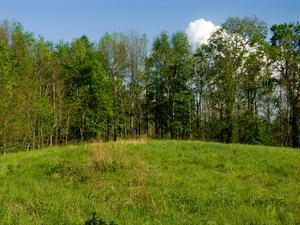 Bennett Gap Meadow