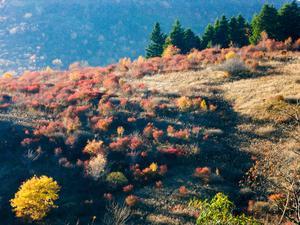Sun Glancing on Fall Color
