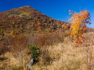 Sam Knob and Fall Color