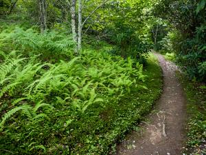 Appalachian Trail and Ferns on Max Patch