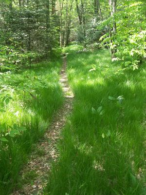 Mountains to Sea Trail in Grassy Woods