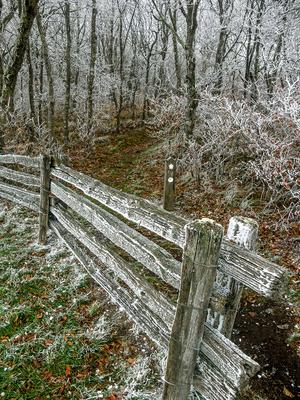 Frosty Fence on the Mountains to Sea Trail