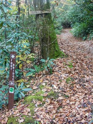 South Mills River Trail Foot Bridge Split