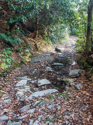 Rocky Section of the South Mills River Trail