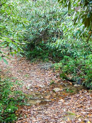 Small Stream Crossing in the South Mills River Trail