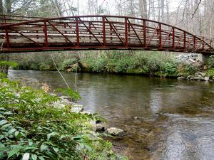 Trail Bridge Over Davidson River