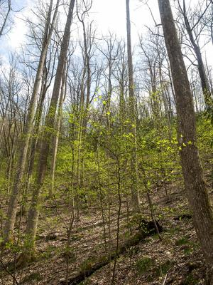 Spring Growth on the North Slope Trail