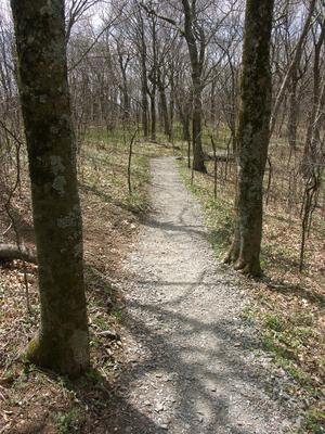 Elk Knob Trail on the Ridge