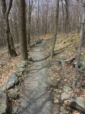 Switchback on the Elk Knob Trail