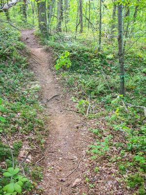 Trail over Dirt Mound