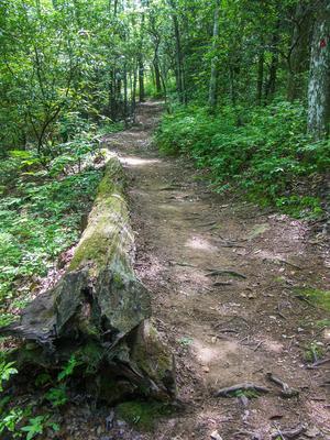 Log Beside the Bearwallow Valley Trail