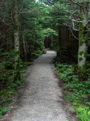 Black Mountains Crest Trail Start