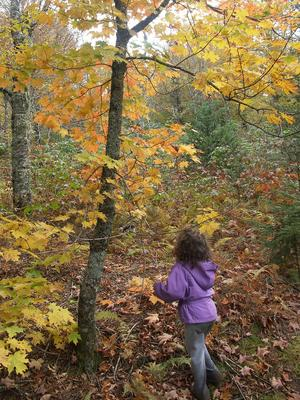 Playing with Leaves on the Flat Laurel Creek Trail