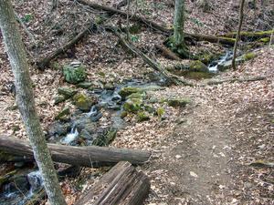Stream Crossing on the Buck Spring Trail