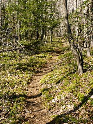 Running Cedar in Florence Preserve