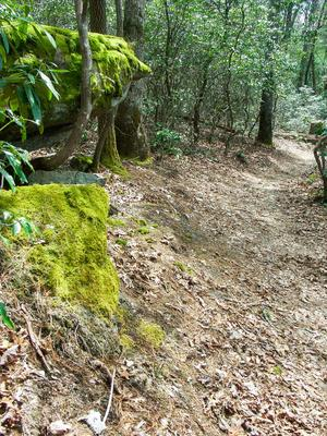 Mossy Rock Outcrop on the Pitch Pine Trail