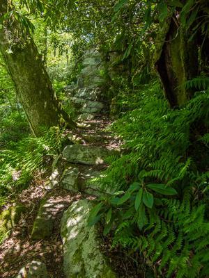 The Appalachian Trail climbs steps near Big Firescald Knob