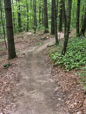 Winding Section of Turkey Knob Trail