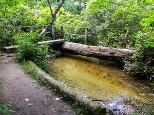 Innovative Log Bridge