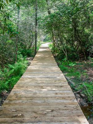 Boardwalk thru Mountain Laurel