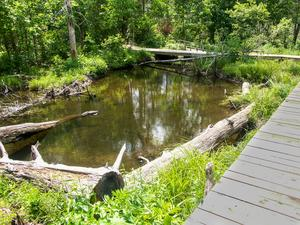 Boardwalk around Beaver Pond