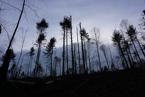 Logged Area at Dusk