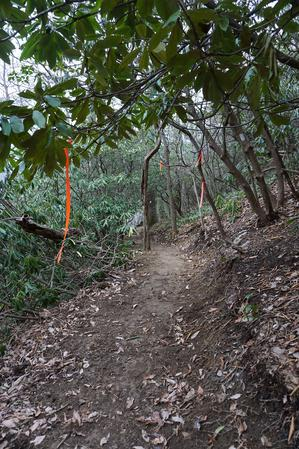 Flagging and Newly Constructed Trail