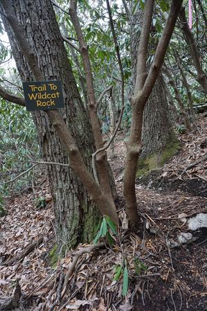 Trail to Wildcat Rock Sign