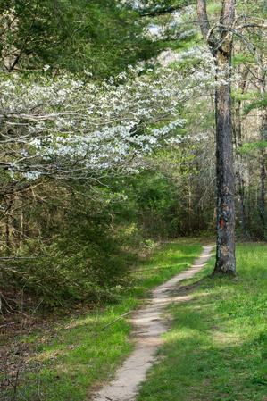 Dogwood and Pink Beds Loop Trail