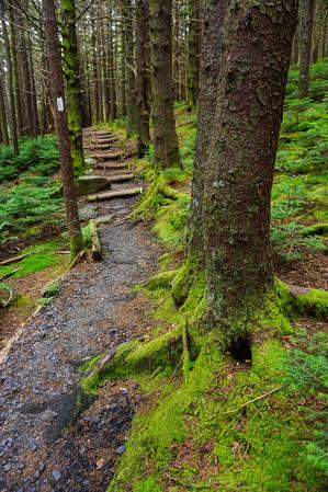 Appalachian Trail Steps on Roan Mountain
