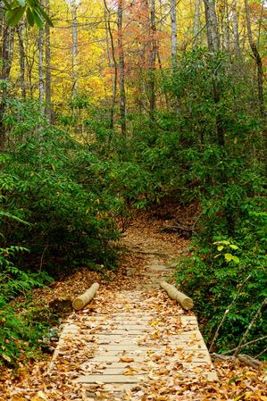 Bridge on the Black Mountain Trail