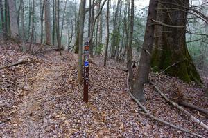Lower Trace Ridge at North Mills River Trail